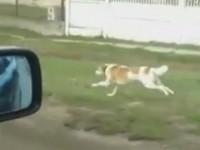 Cristi de Satu Mare. Câinele dedicat stăpânului său (VIDEO)