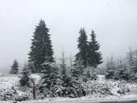 nins2