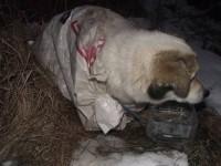 Cruzime fără margini. Câine lăsat să moară în frig (FOTO)