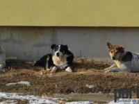 O haită de câini vagabonzi sperie locatarii unei străzi din Satu Mare (FOTO)