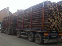 Păduri furate Tir-ul la Satu Mare. Pădurari complici