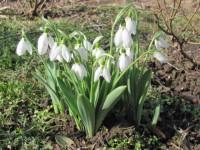 Vine primăvara la Satu Mare. Ce temperaturi ne așteaptă