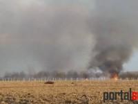 UPDATE A ars balta de la Odoreu. Anchetă a Poliției pentru depistarea făptașului (FOTO)